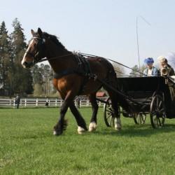 Linda Liljegren med hästen Belgaraf